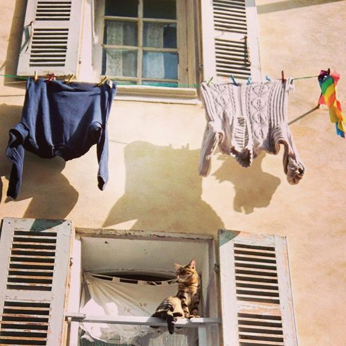 Cat-in-ciotat