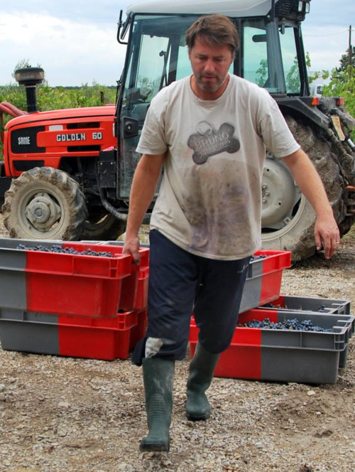 grape wine harvest in france with tractor boots harvester, winemaker, buckets, jean-marc