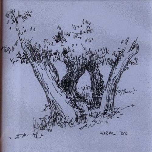 WRAL-olive-tree