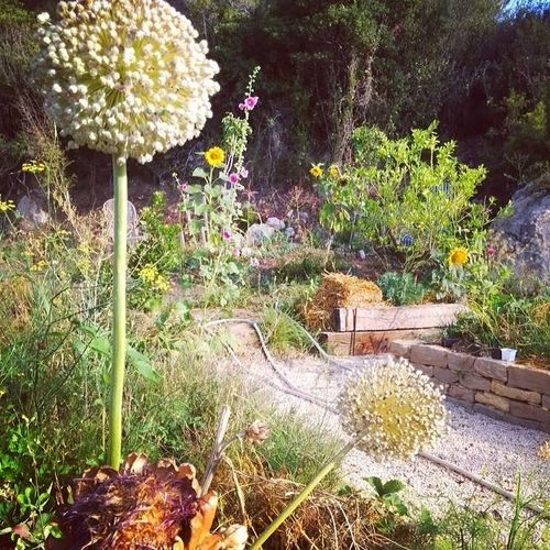 My-permaculture