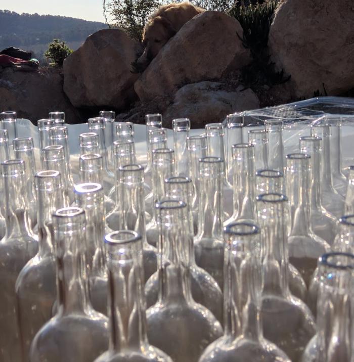 wine bottling south of france vineyard golden retriever