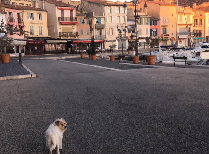 dog sea Port in cassis france