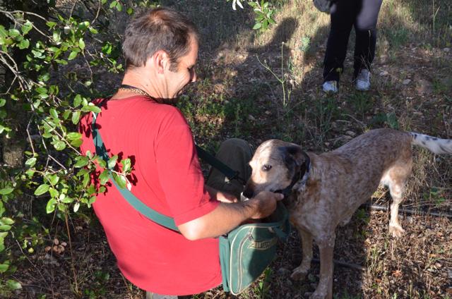 French Truffle hunting dog oak tree var France