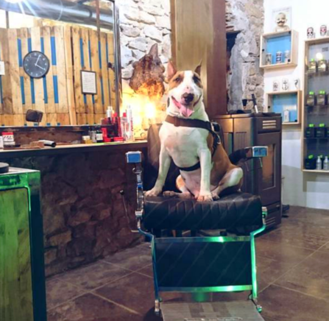 Phare Barbershop Dog La Ciotat France