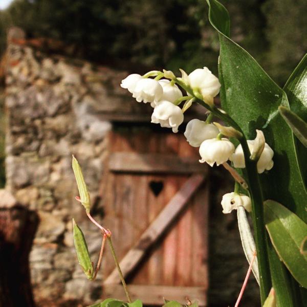 Muguet lily of the valley france fête du muguet may 1st offer flowers