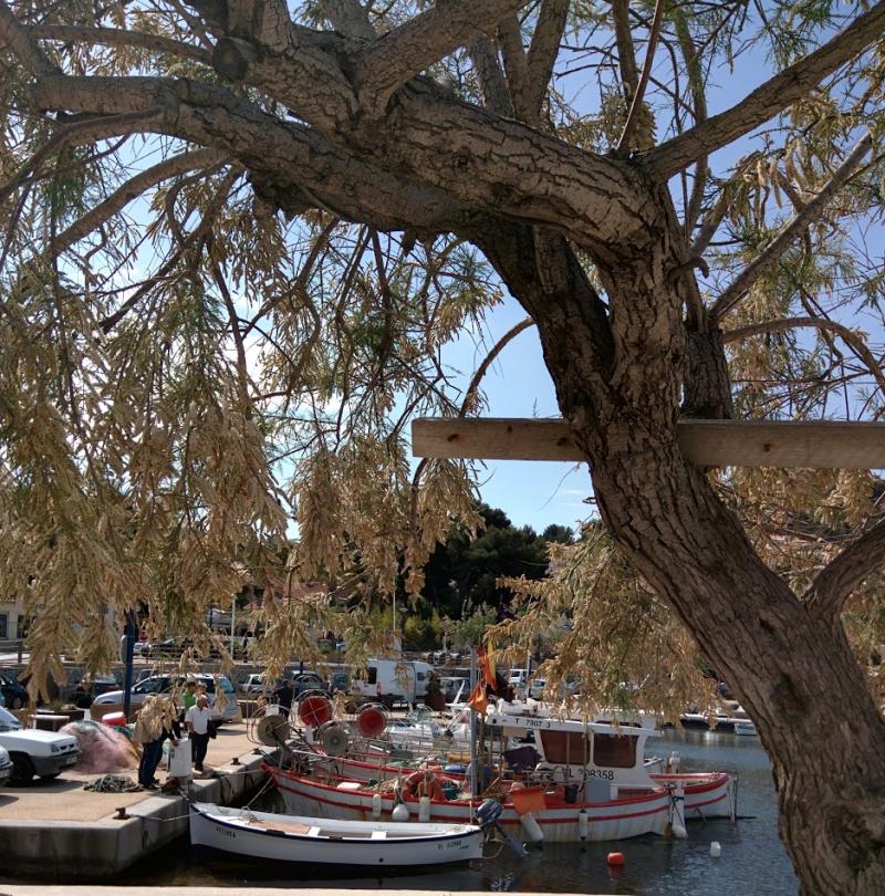 Wooden fishing boats at la port de la madrague