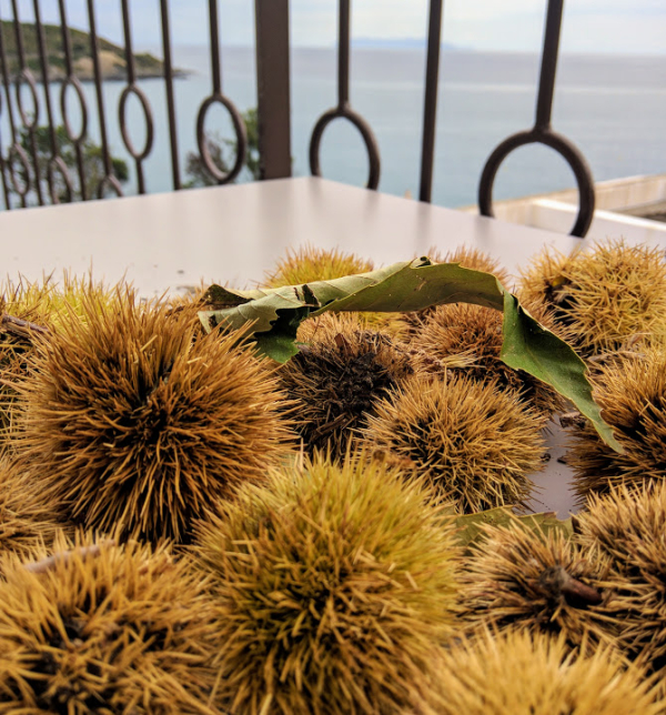 Corsican chestnuts chataignes are in season in october and used in flans  fiadons  and many of the islands culinary specialties