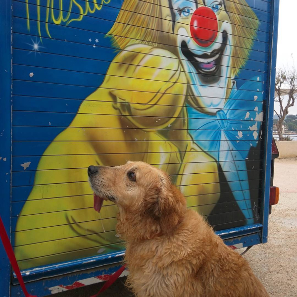 Smokey and clown at circus