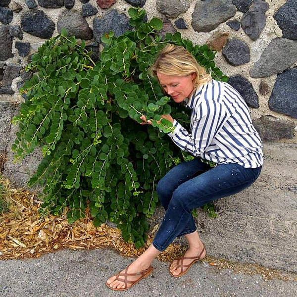 Smelling the scent of capers and caper bush on santorini island Greece leather sandals