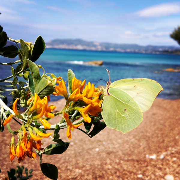 Butterfly in st cyr les lecques france mediterranean sea