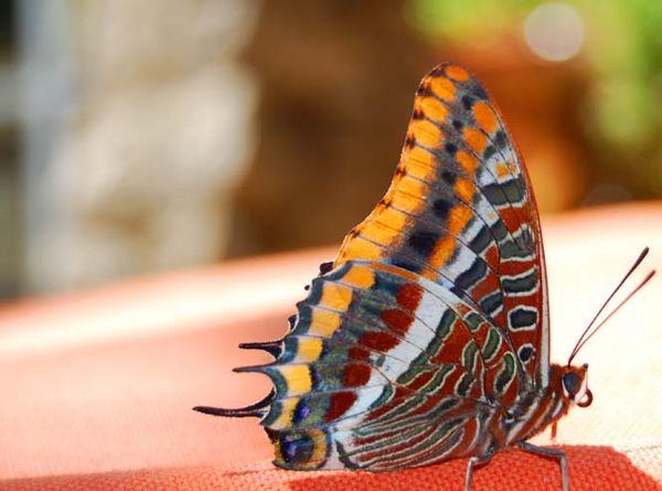 Le papillon the butterfly