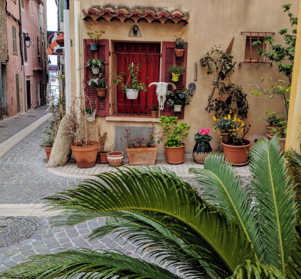 Window in cassis france palms