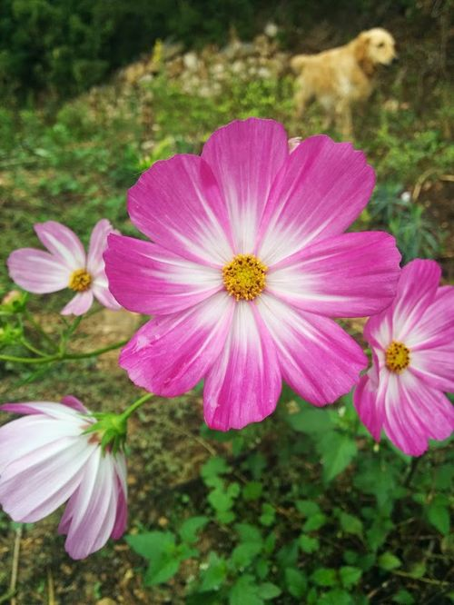Cosmos-in-oct
