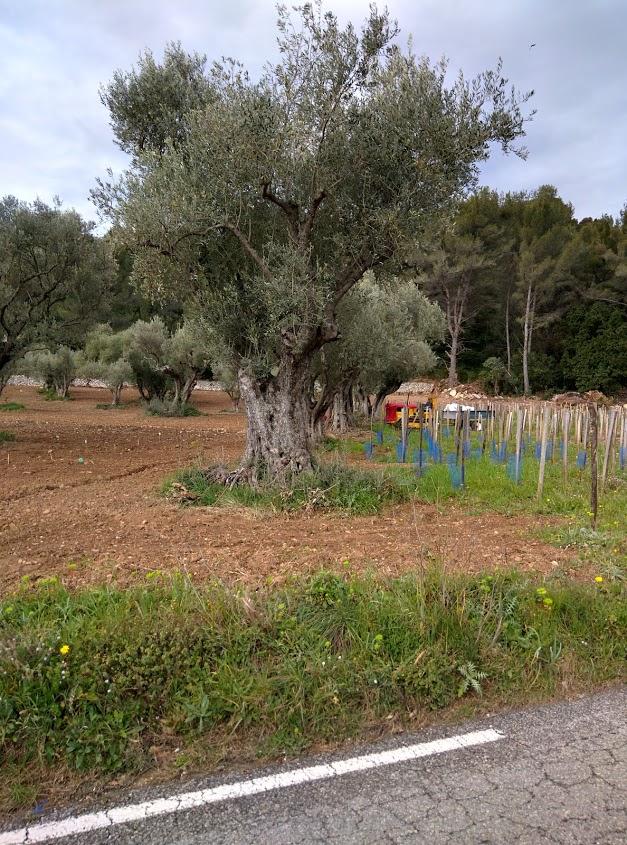 Planting-day