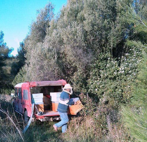 Beehives-at-Mas-des-Brun