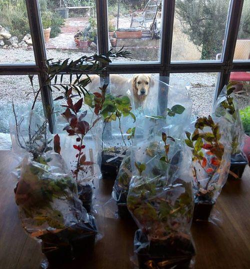 Blueberry-plants