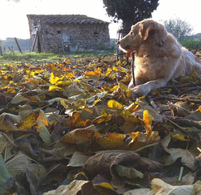 Smokey-autumn-leaves