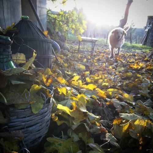 Smokey-wine-jug-leaves