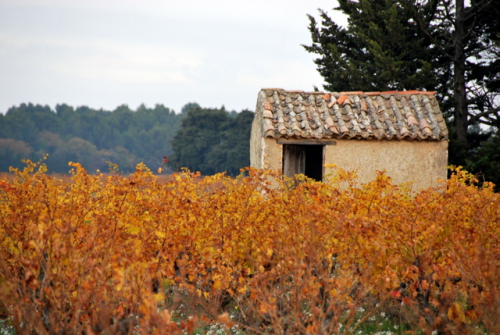 cabanon, autumn, france, provence, vineyard, yellow leaves