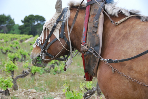 French vineyard horse cheval  tatted handmade fly mask