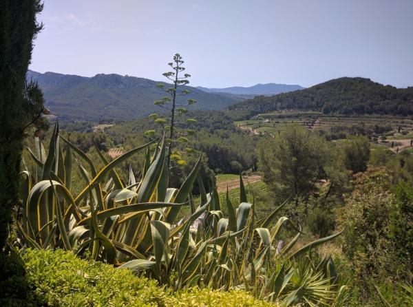 Chateau de Pibarnon countryside
