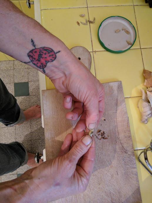 Breaking open the cardamom