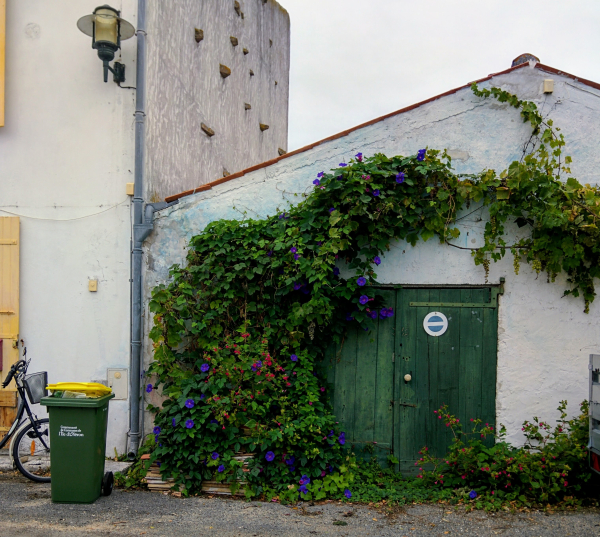 Poubelle garbage bin can vine climbing France