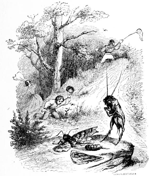 Cricket grillon sketch