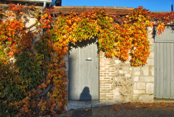Leaves stone building