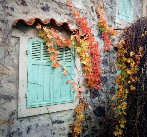 Leaves-001
