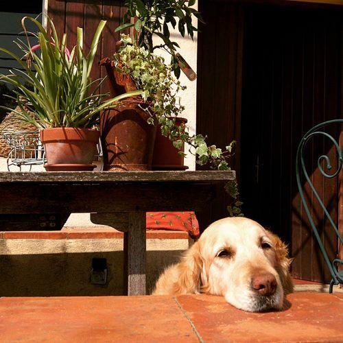 Breizh-on-porch