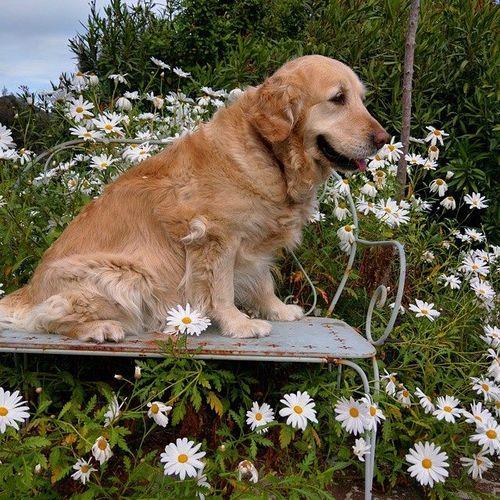 Breizh-and-daisies