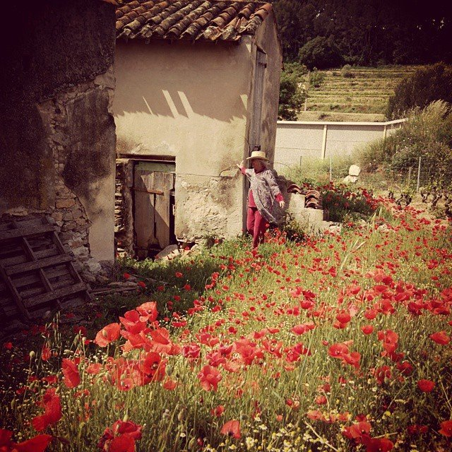 Jules-and-poppies