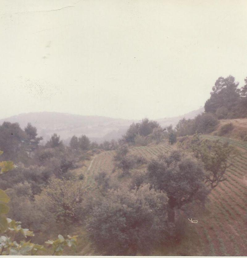 Field-behind-house