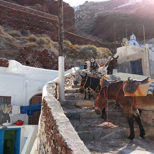 Santorini-mules