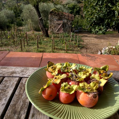 Annies-persimmons
