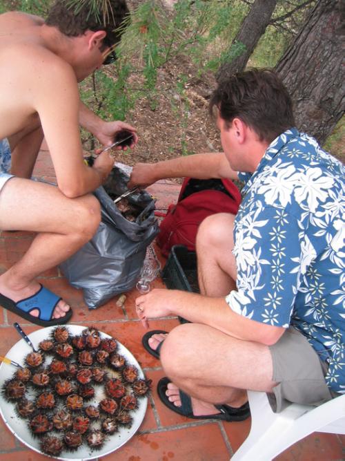 use scissors to prepare sea urchins oursin