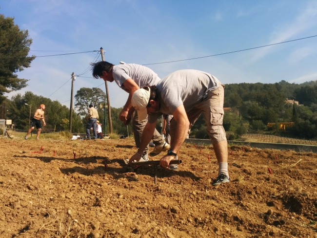 planting vines in vineyard France Bandol