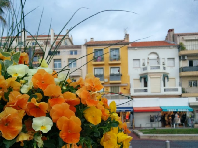 Flowers at the port of Bandol France