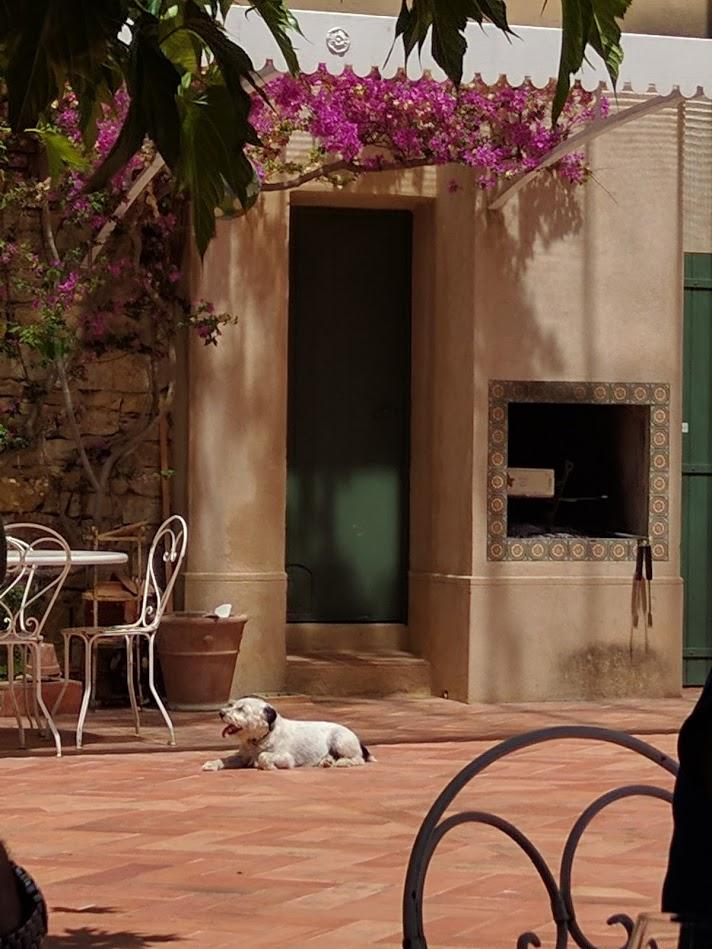Dog at Chateau de Pibarnon