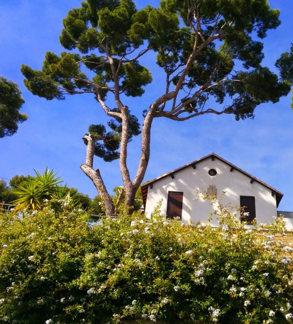 House in cassis