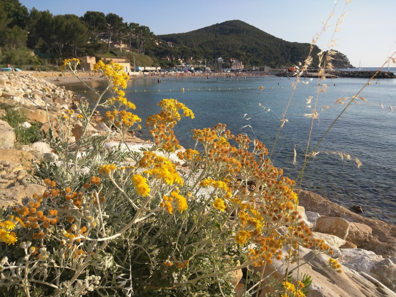 La Madrague beach yellow flowers