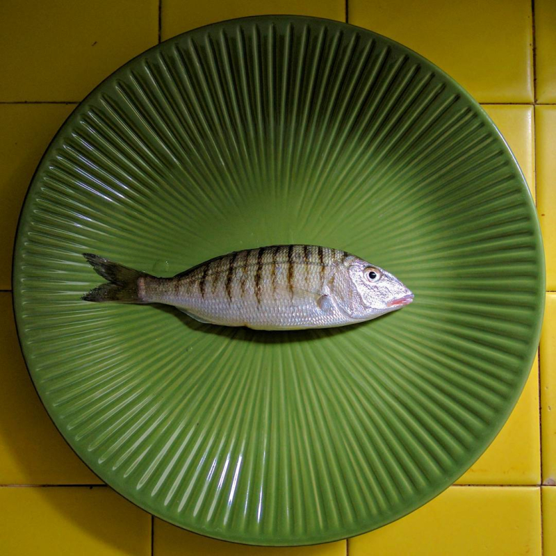 Mediterranean sar fish poisson saar from the coast of La Ciotat France green plate yellow kitchen tiles