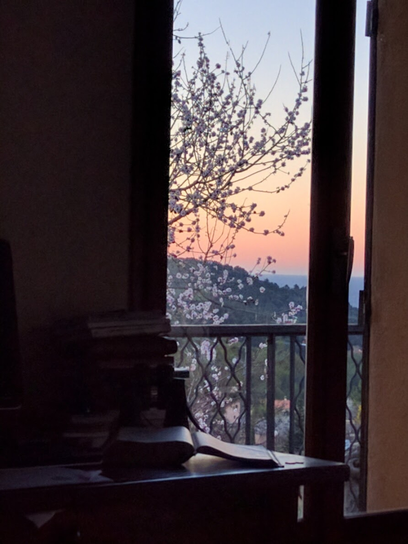 My desk and almond blossoms
