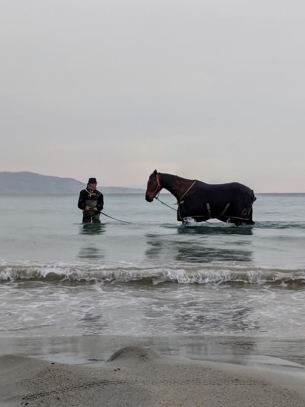 Horseman cavalier horse mediterranean sea training