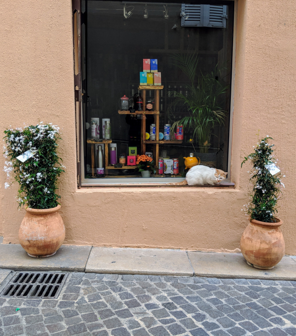 Cats and jasmine in cassis france