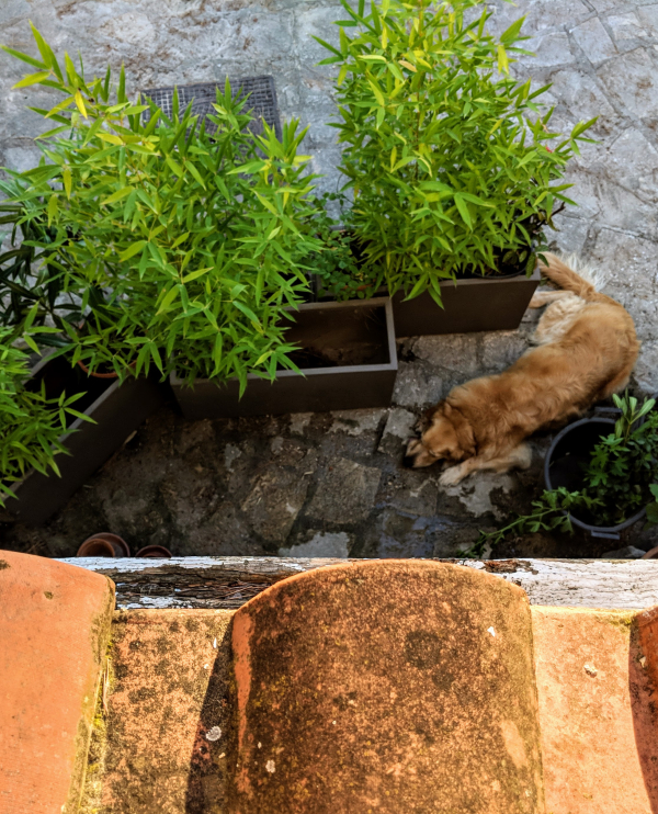 Tiles and bamboo and golden retriever