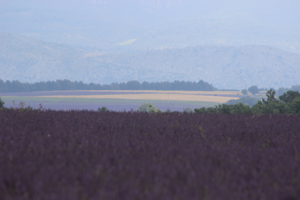 Valensole France paint in provence artist art tour travel group