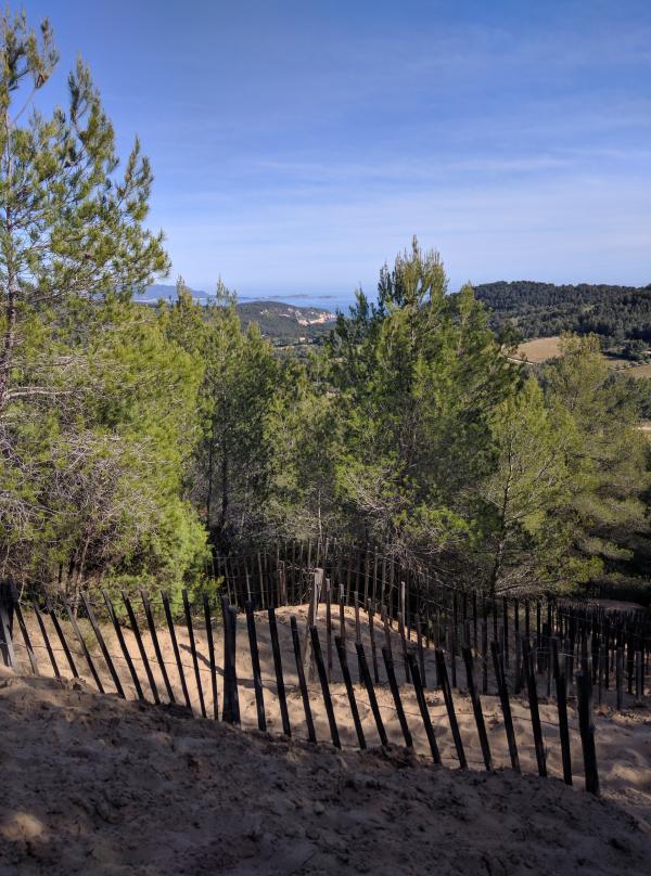 Mediterranean forest