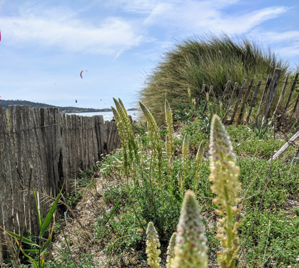 Grass picket fence giens beach kitesurf hyeres